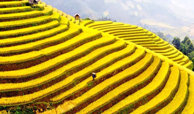 Hoang Su Phi terraced fields, masterpieces of minority groups