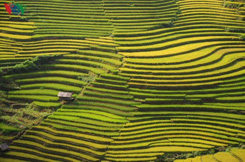 CNBC names Mu Cang Chai among top travel destinations of 2020